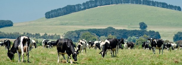 Dairy Development Grants