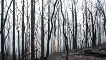 Small Business Bushfire Support Grant