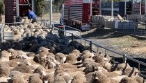 Farm Safety Rebate Scheme - the program is now closed to new applications
