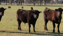 Pasture Recovery and Management Grant Program