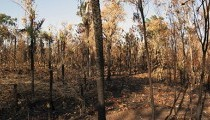 Victorian Bushfires: January and February 2014