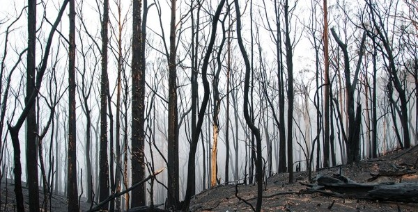Emergency Bushfire Primary Industries Grants