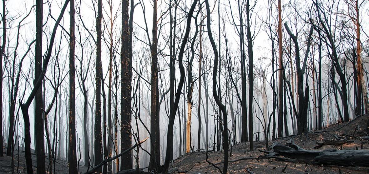 Victorian Bushfire Assistance