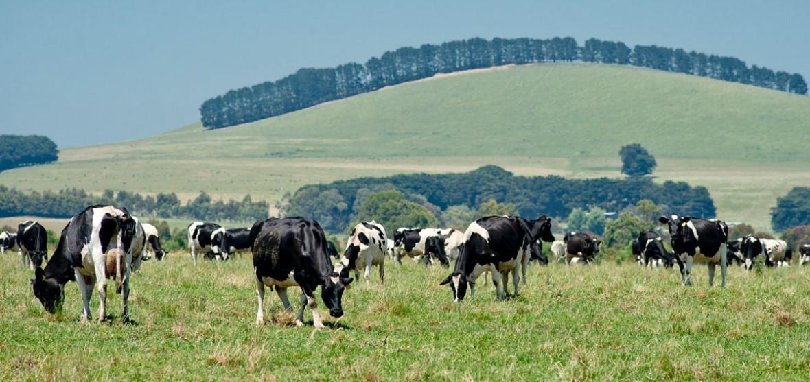 Dairy Development Grants