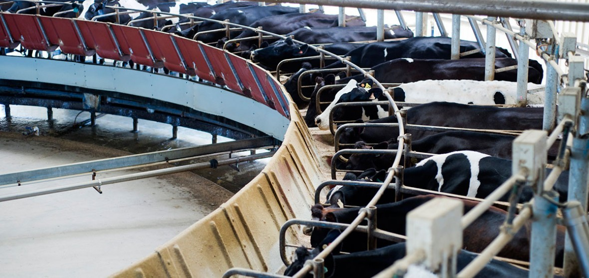 Dairy Recovery Concessional Loans Scheme