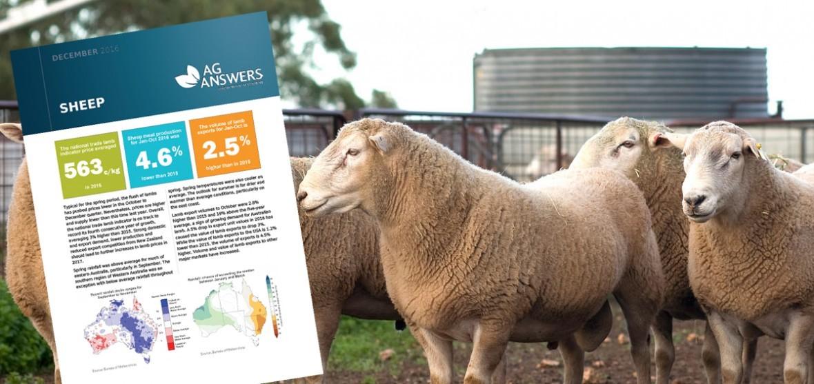 Sheep Update
